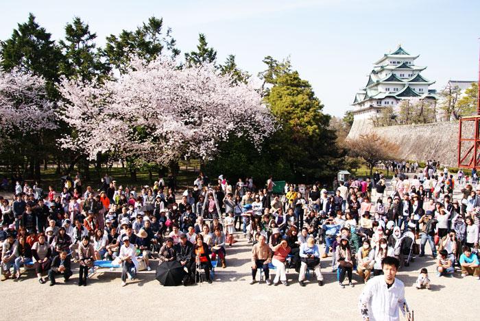 2011sakura_3